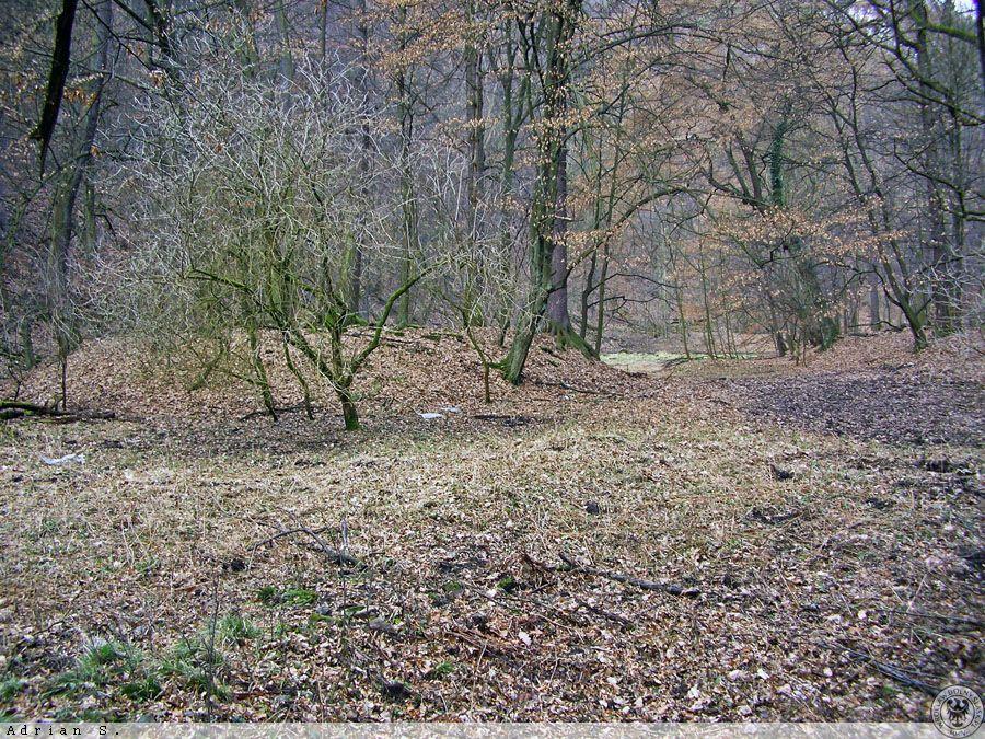 Der Rest des erhalten gebliebenen Schwanenteiches und die Form der Insel – Autor: Adrian Sitko Quelle: dolny-slask.org.pl